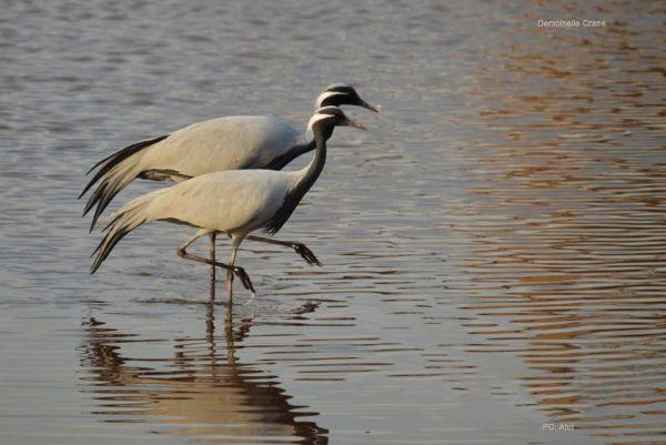 Bird Watching in Osian