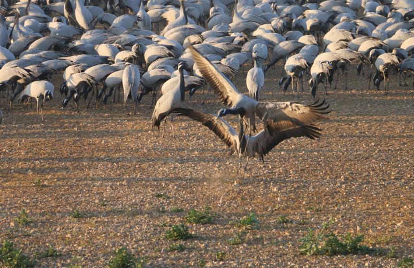birds sanctuary safari